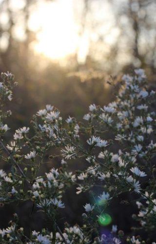 arbre en fleur pendant le lever de soleil