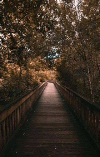pont dans la forêt