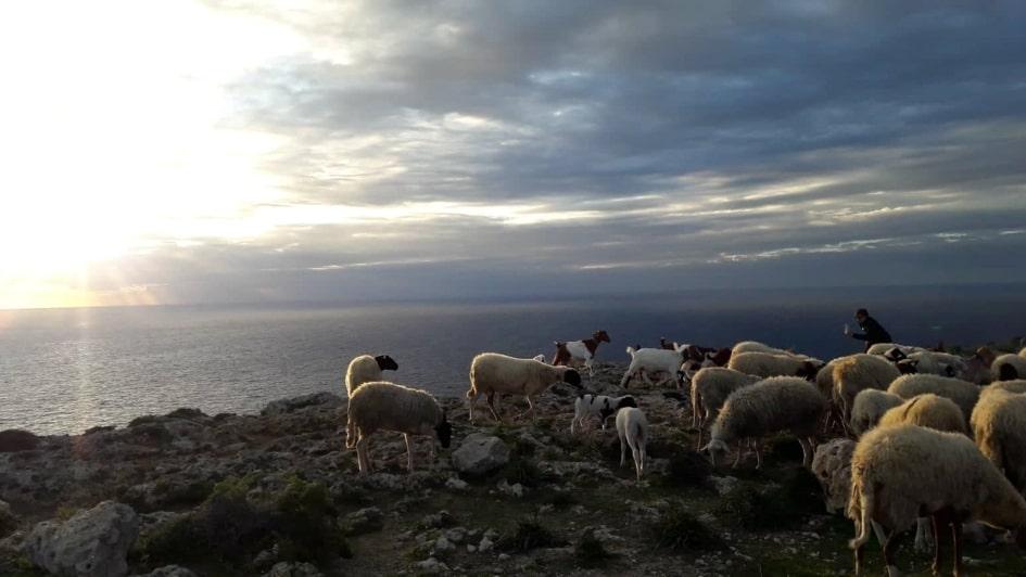 Dingli Malte