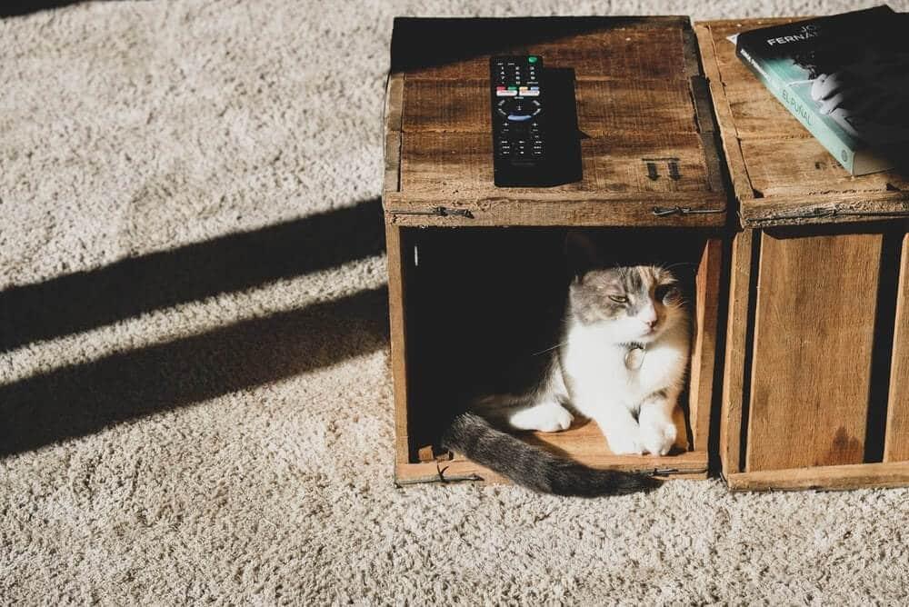 chat caché dans une caisse en bois
