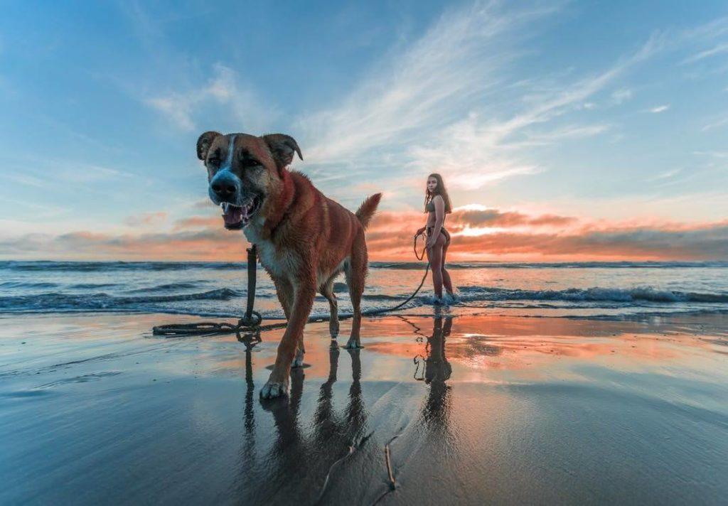 jeune femme promenant un chien à la plage au coucher de soleil