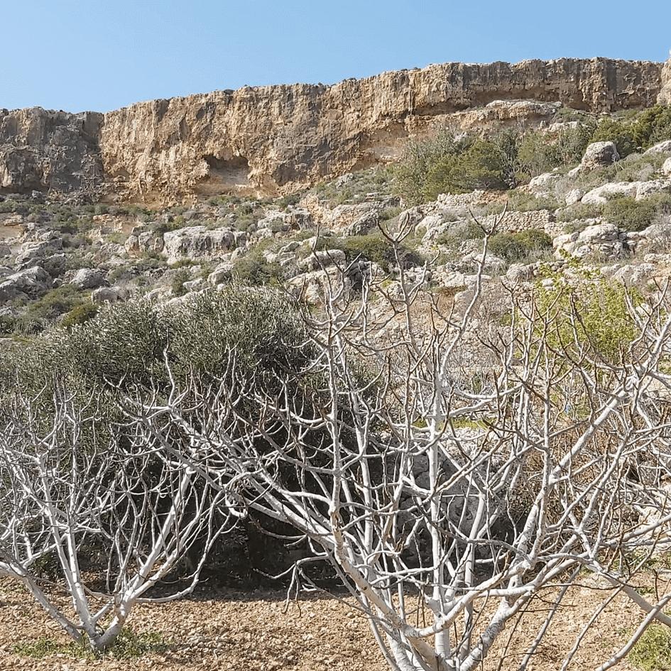 Sentier sauvage de randonnée à Malte